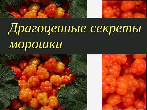 Ягода здоровья - драгоценная морошка. На зиму витаминный рецепт