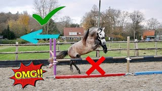 FREE JUMPING MY DRESSAGE STALLION...(disaster)