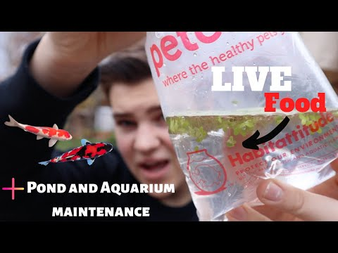*FREE* LIVE FISH FOOD FROM *PETCO* (duckweed)