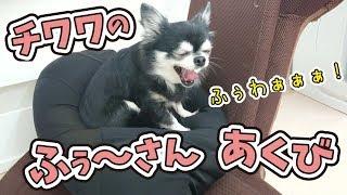 犬のひみつきちホームページ http://www.dogs-base.com/ 柴犬 さくくん ...