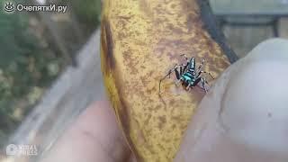 Неоновый паук