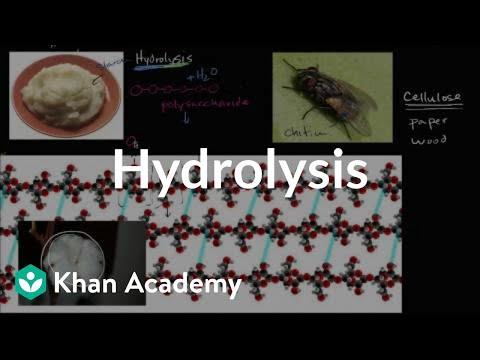 Hydrolysis | Macromolecules | Biology | Khan Academy
