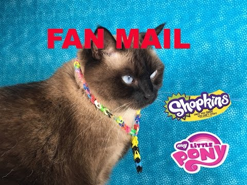 Cinco De Mailo Fan Mail September Opening Unboxing With Shopkins   PSToyReviews