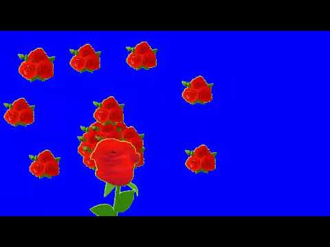 Grin screen video flower animation video