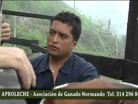 AngloGold Ashanti Colombia apoya iniciativa del sector agricola en Cajamarca, Tolima