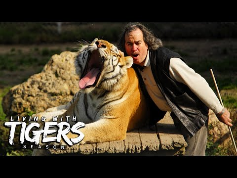 The Men Who Cuddle Tigers   LIVING WITH TIGERS SEASON