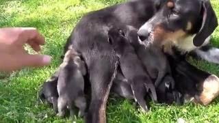Маленькие собачки прикольные и с хорошим аппетитом