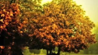 Gambar cover Sokolov - Rameau Nouvelles suites de pièces de clavecin en G