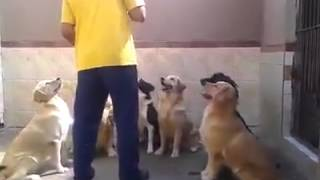 Amazing Well Mannered Dogs