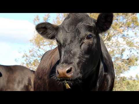 Beautiful Impressions of Farm (Tasmania)