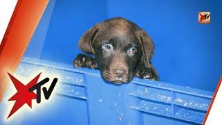 Hundewelpen aus dem Internet: ein brutales Geschäft – Die ganze Reportage | stern TV