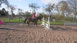 Toby Jumping At Home - 3/04/2012