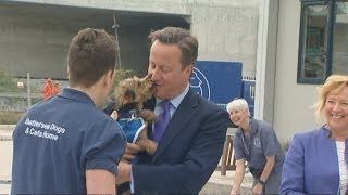 David Cameron At Battersea Dogs And Cats Home: Pm And Pooch Smooch!