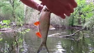 Это сказка, а не рыбалка! Ловля голавлей на самодельного жука!