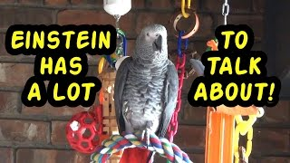 Einstein the Talking Texan Parrot has a lot to talk about!