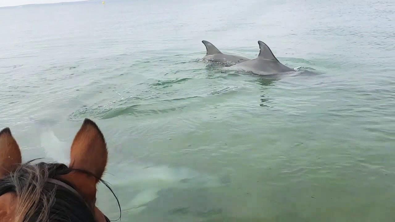 כל צהלה: סוס עושה חברים עם דולפינים סקרנים