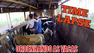 tirando leite das vacas ( TIME LAPSE )