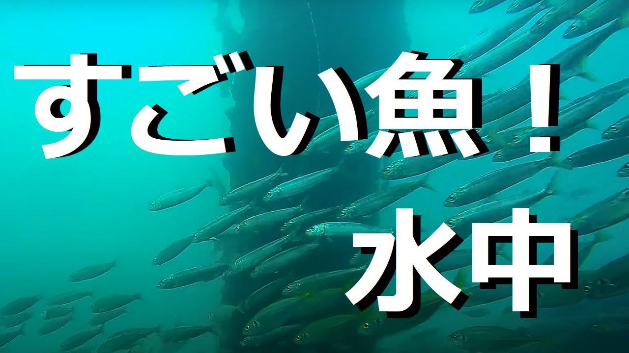 映画|冷たい熱帯魚の動画を無料フル視 …