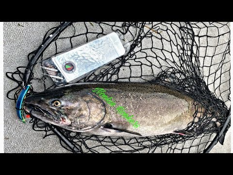 Columbia River Salmon Fishing Solo Trip In Tri-Cities Wa