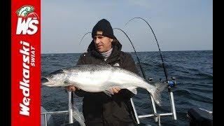 Bałtyckie łososie łowione na trolling