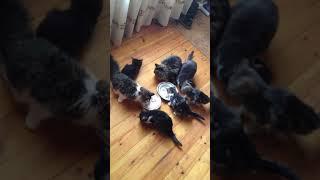 Коты! Много котов!