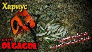 Хариус горная рыбалка на строптивой реке