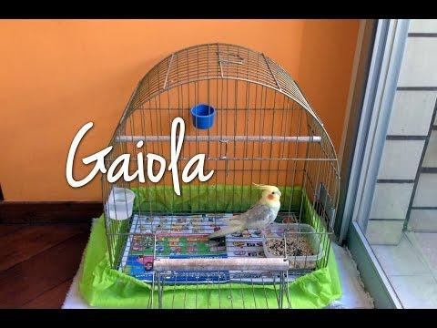 Gaiola Para Calopsita Mansa.
