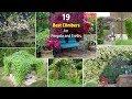 19 Best Pergola Plants