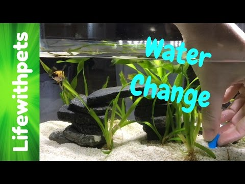 how to do a water change on a betta fish tank -