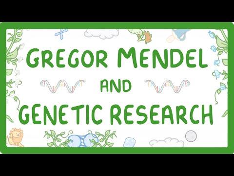 GCSE Biology - Gregor Mendel And The History Of Genetics #84