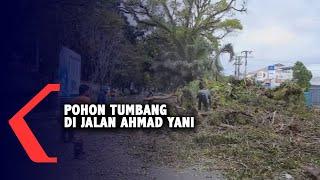 Download Pohon Tumbang Di Jalan Ahmad Yani