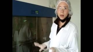 Prácticas para el uso del laboratorio: Cámara de Flujo Laminar