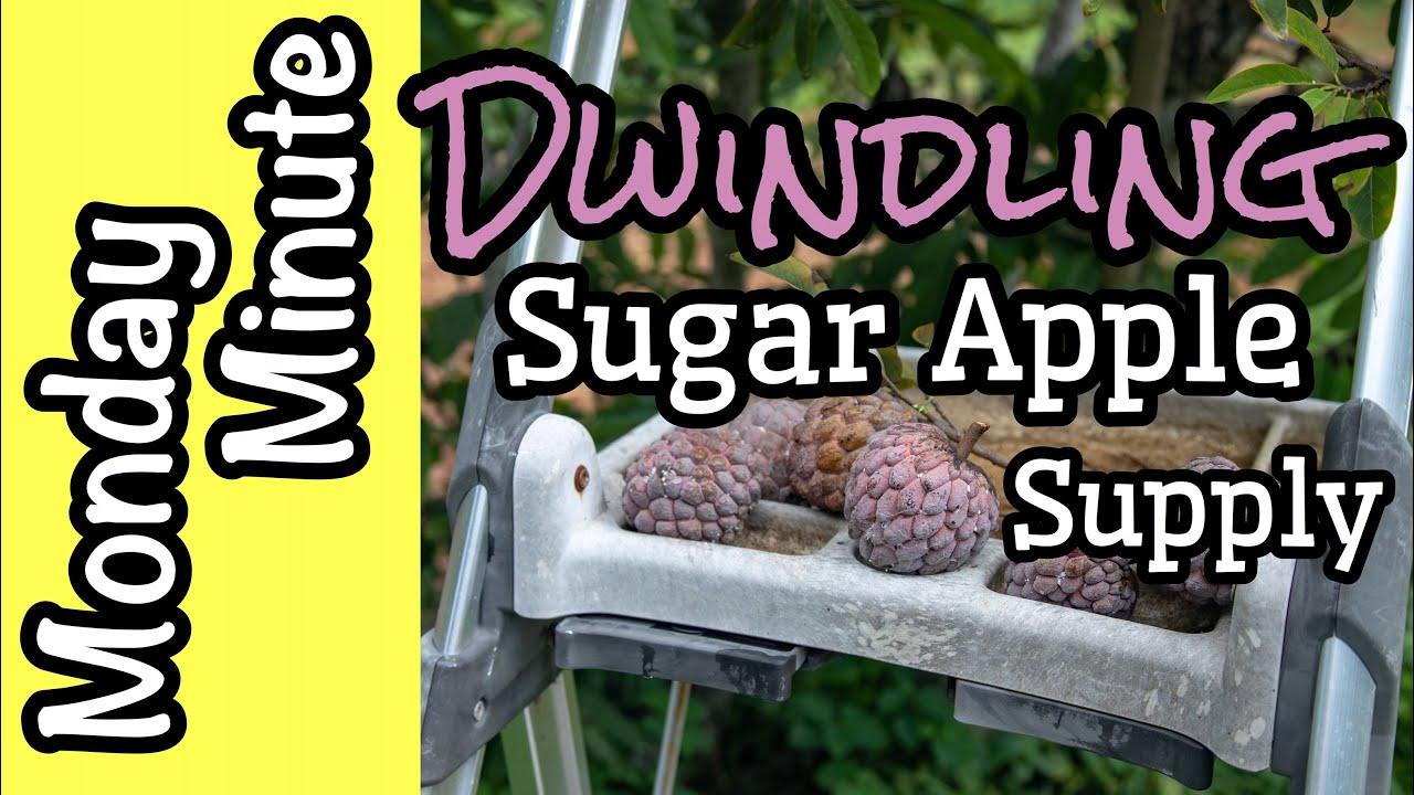 Monday Minute- Dwindling Sugar Apple Supply