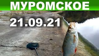 Рыбалка на Муромском водохранилище с дамбы под дождем