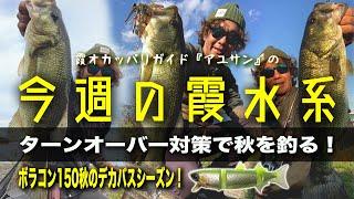 ターンオーバー対策で秋を釣る!『霞オカッパリガイド・アユサンの今週の霞水系』