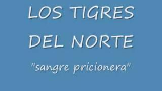 sangre pricionera los tigres del norte