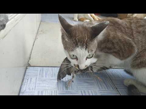 แมวกินนก ยายช่วยนก ไม่ทัน มันขาดใจตายก่อน ก็เลยไห้มันกินไป