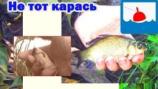 Отчёт о рыбалке на карася в июне_ за рыбой не в магазин(Здравствуйте! Это я откопал видео из моего архива об загадочном озере: 2М. 2014 год. В те времена на это озеро..., 2016-06-30T13:36:38.000Z)