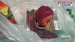 Strawberry Contamination | 9 News Perth