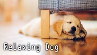 Музыка Sleeping Собаки и щенки