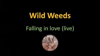 Wild Weeds : falling in love (live)