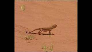 Экологические группы животных. Животные аридных зон