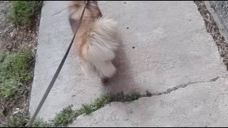 VLOG: гуляю  с собакой!)))Сходили в зоомагазин!