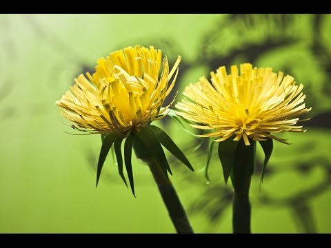How to make a paper flowers (Taraxacum )