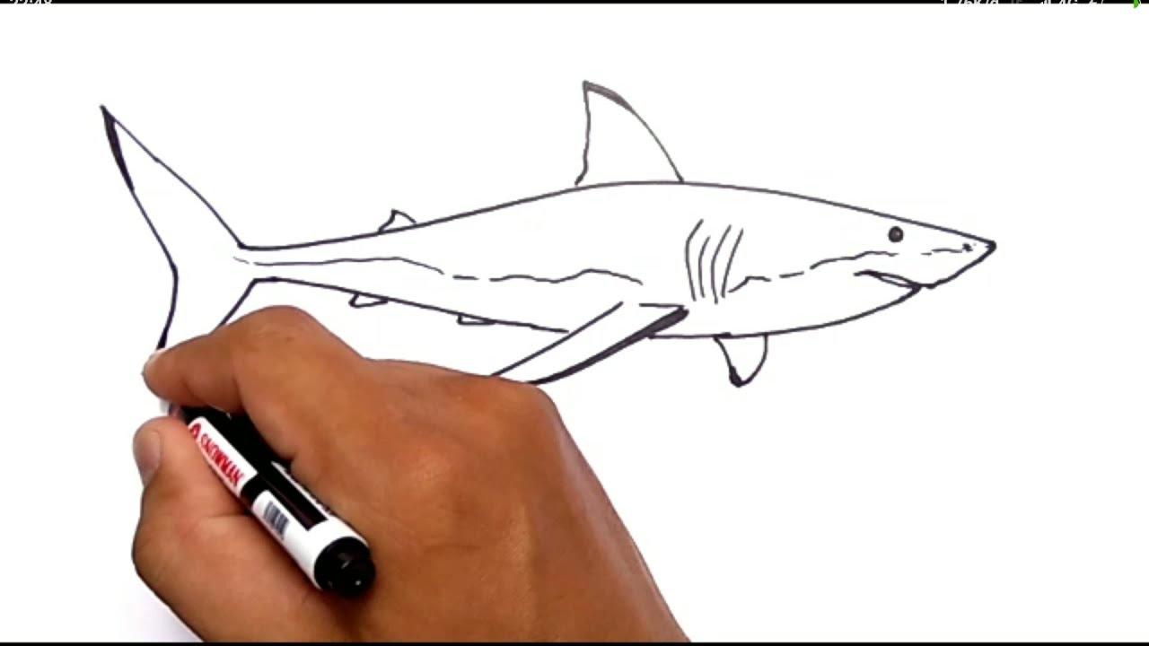 cara menggambar ikan hiu / how to draw shark - YouTube