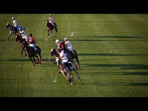 British Polo Day: Passion for horses
