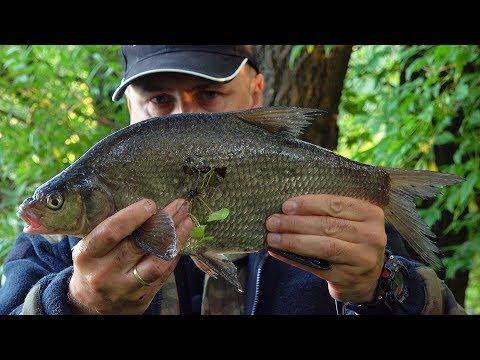 Wędkarstwo spławikowe - Łowienie leszczy na starorzeczu Wisły - Sprawdzanie nęconych miejscówek [WP]