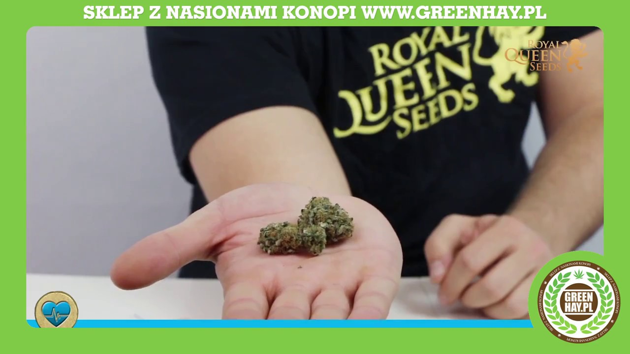 efbb029eb Royal Queen Seeds - Medical Mass Recenzja [ENG] - YouTube