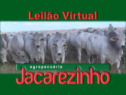 VT JACAREZINHO