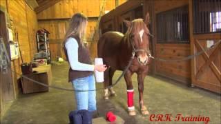 Applying Leg Wraps - Standing wraps and Polo wraps